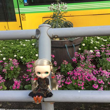 鹿児島中央駅と桜島大根とブライス